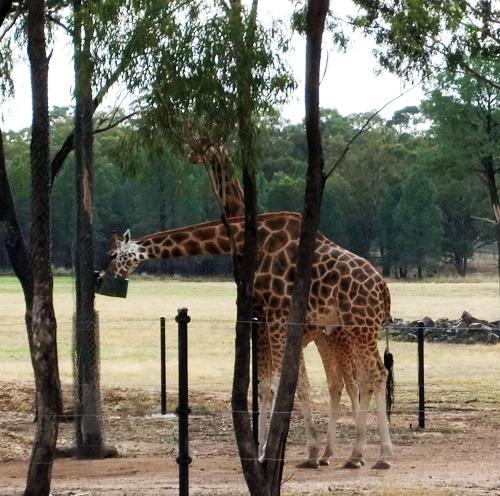 hayvanat bahçeleri elektirikli çit